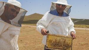 Volkanik dağda 60 bin kovanla bal hasadı; hedef 600 ton